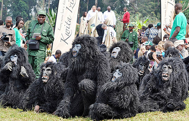 Rwandan children perform in baby gorilla costumes for approximately 20,000 Rwandan villagers, government officials and tourists as part of Rwanda's 7th Annual Kwita Izina (baby naming) Ceremony for the country's rare mountain gorillas on June 18, 2011 in Kigali. Living in parks straddling Rwanda, Democratic Republic of Congo and Uganda, the rare mountain gorillas have become the center piece of Rwanda's growing tourism industry as their population has risen to 780 in recent years from just 250 in the 1980's.